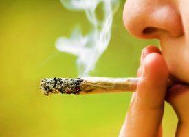 5 Reasons Why Government should make Marijuana legal in India - Laffaz